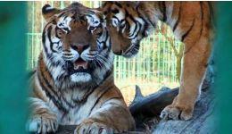 Read more: Mâine, intrare GRATUITĂ la Grădina Zoologică