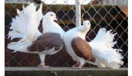 Read more: Expoziție de păsări și animale de rasă, la Casa Cărții din Pitești