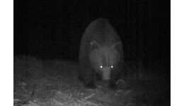 Read more: UPDATE/// Urs semnalat într-o comună din Argeș. S-a transmis mesaj RoAlert