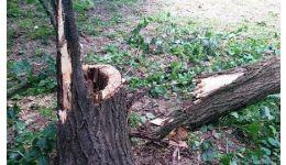 Read more: Argeș. Mamă a 7 copii a murit strivită de un copac