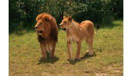 Read more: Program special la Zoo în minivacanța de Paști