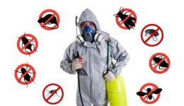 Read more: Campanie de dezinsecţie, dezinfecție și deratizare, la Mioveni