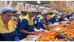 Read more: 150 locuri de muncă în domeniul agricol (recoltare, ambalare fructe) în Spania prin intermediul Reţelei EURES