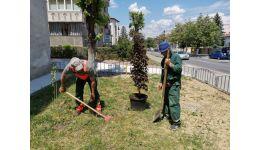 Read more: Primăria condusă de ecologistul Mircia Gutău, continuă campania de plantare de arbori şi arbuşti în municipiu