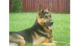 Read more: Povestea unui câine lup