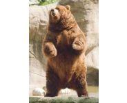 Read more: Ursul şi vânătorul, o poveste cu iz constituţional (partea a II-a)