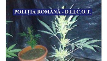 f_350_200_16777215_00_images__2017_cannabis-valcea.jpg