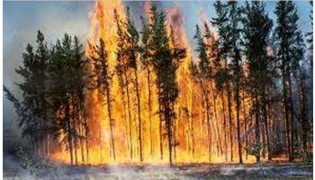 f_350_200_16777215_00_images_banner4_incendiu-forestier.jpg