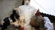 Focar de gripă aviară în Argeș. Păsările din 2 gospodării vor fi ucise