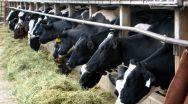 Guvernul Grindeanu susține sectorul zootehnic