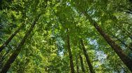 Veste bună de la ROMSILVA! A început procesul de înscriere a dreptului de proprietate publică a STATULUI asupra pădurilor administrate
